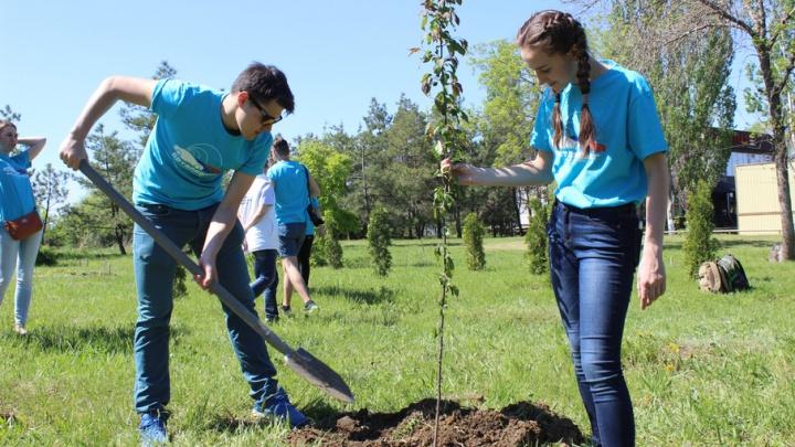 Участники патриотического автопробега привезли в Волгоград яблоневую рощу
