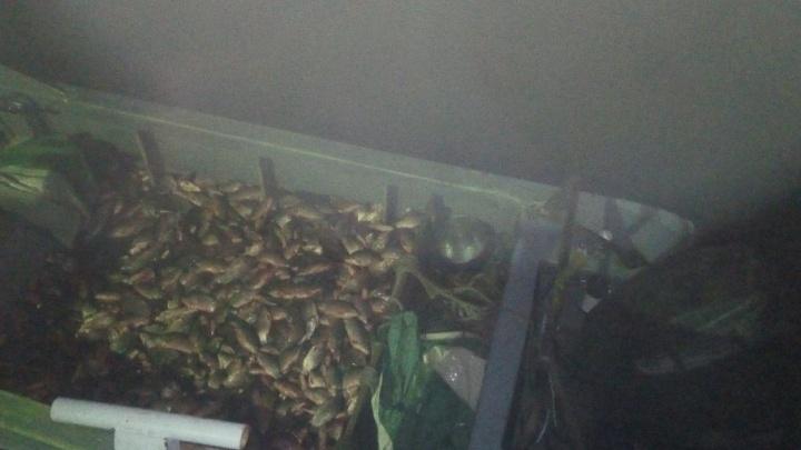 За тысячу пойманных сетью рыб донскому браконьеру грозит два года тюрьмы