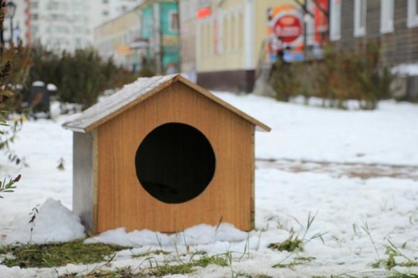 Вот такая будка появилась недавно на Чумбаровке для пса, которого сегодня обсуждает весь город