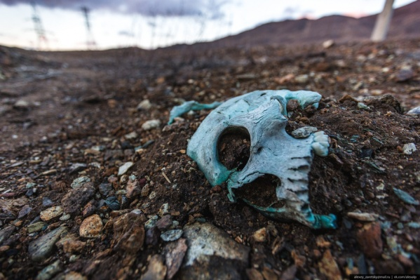 Дожди и талые воды вымывают останки похороненных на кладбище людей