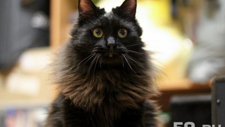 Мурчайка и прикамская короткошерстная: пермский приют придумал новые породы кошек