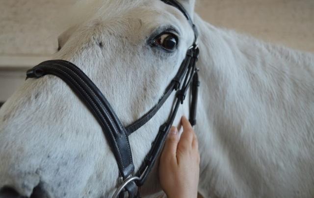 Лошадь любит маникюр