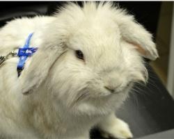 Проблемы туризма в Перми решит кролик?