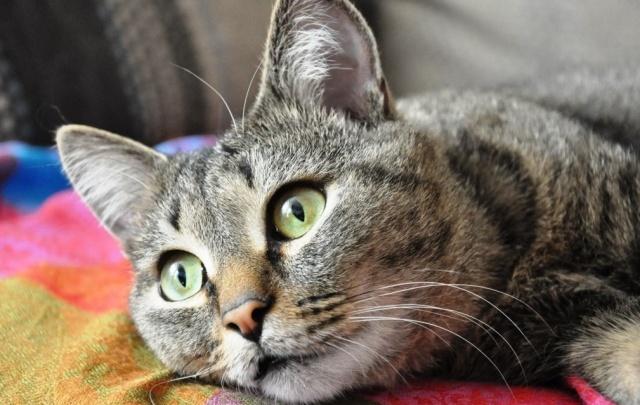 Летом в Тюмени откроется первое котокафе, где поселятся 20 кошек