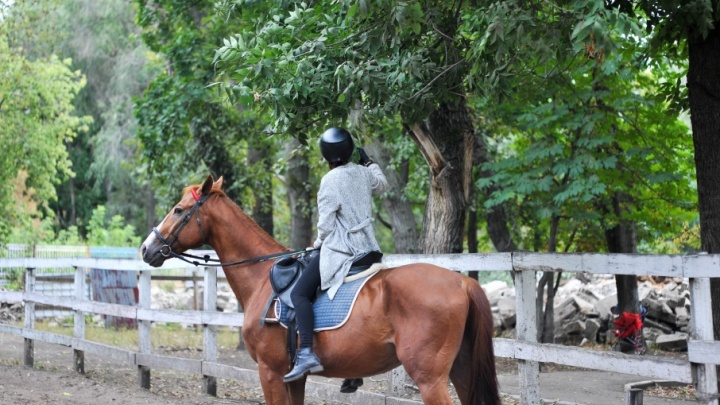 Вместо конюшни парковка: лошади из парка Металлургов остались без дома