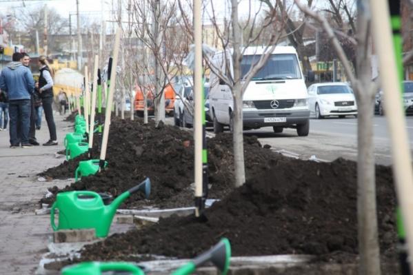 На городских улицах высадят около восьми тысяч деревьев и более девяти тысяч кустарников