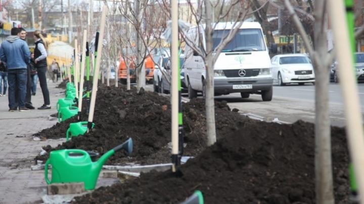 Город станет зеленее: на субботнике в Ростове высадят 17 тысяч деревьев и кустарников