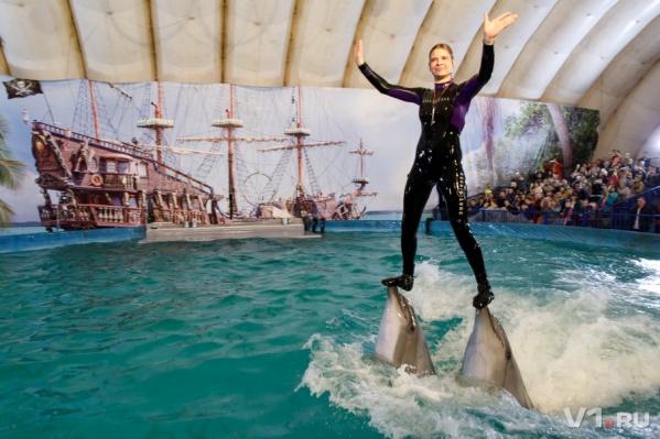 В город приехали два дельфина, белуха и морские котиики