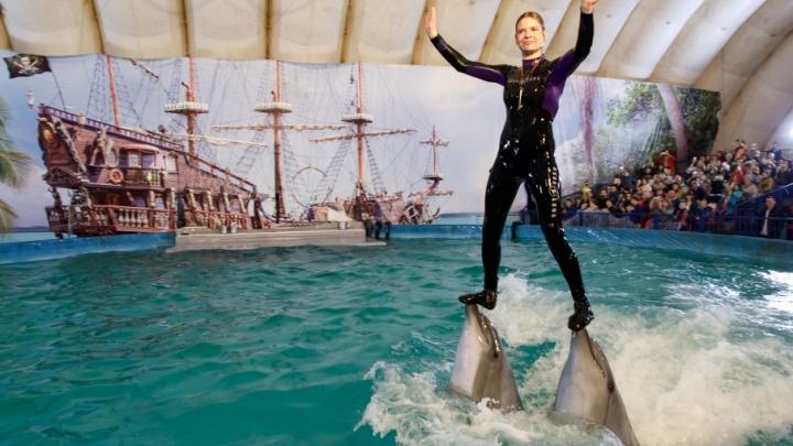 В Волгограде черноморские дельфины станцевали рок-н-ролл
