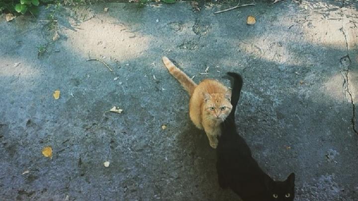 Жители Волгоградской области разводят кошек, спасаясь от полчищ мышей и бешенства