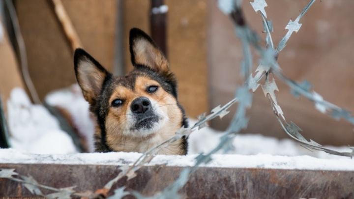 Самарские власти решили выделять землю приютам для бездомных животных