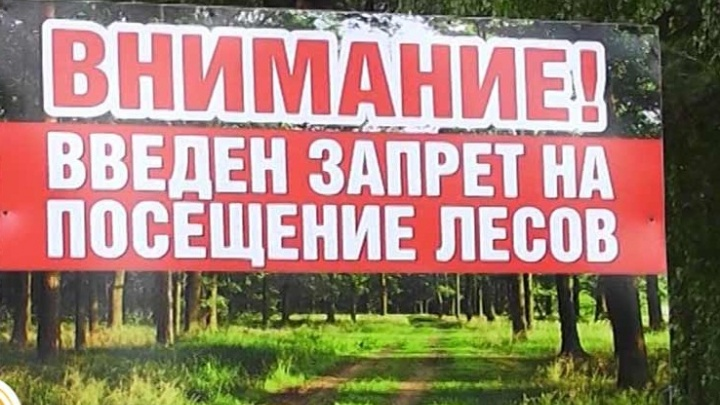 Леса Волгоградской области останутся «под замком» до середины августа