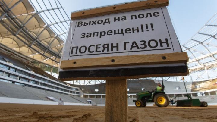 На газон стадиона «Волгоград Арена» посадили нужную траву