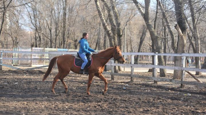 Конный клуб в парке Металлургов хотят обустроить в стиле фахверк
