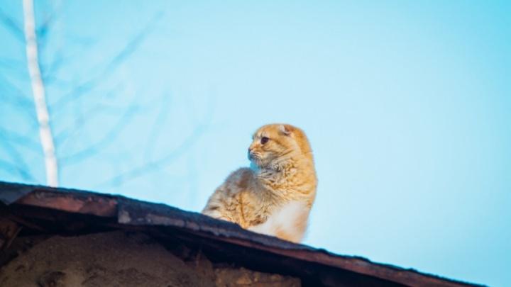 Для нового Центра безнадзорных животных Ростова отловят 1500 четвероногих