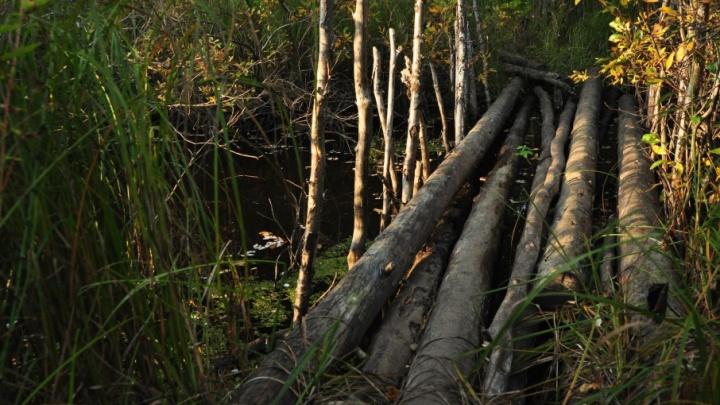 Незаконные вырубки в Верхнетоемском районе нанесли ущерб в 30 миллионов рублей