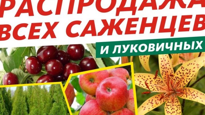 «Мега» и «МегаЛайт» объявляют распродажу саженцев и луковичных