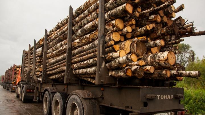 В Поморье с торгов ушло 300 тысяч кубометров леса