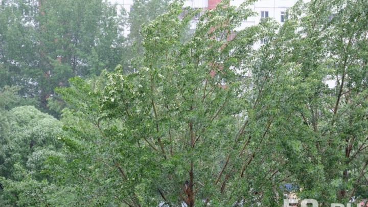 Лучше не стоять рядом с деревьями: МЧС предупреждает о сильном ветре в Прикамье