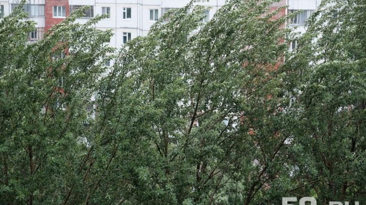 МЧС: шквалистый ветер в Прикамье усилится до 27 метров в секунду
