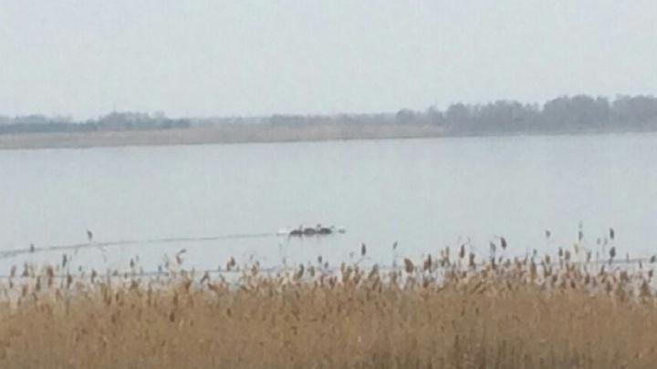 «Не спасайте белых лебедей»: челябинцев попросили не ловить краснокнижных птиц на льду