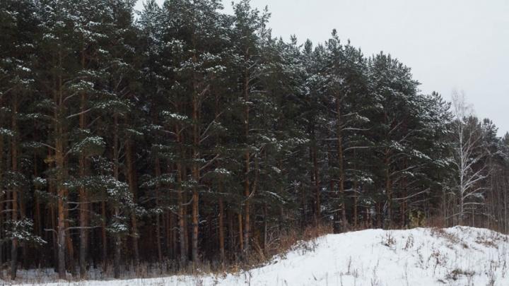 Охотники бьют тревогу: в Тюменской области из-за снежного марта волки стали выходить из леса к людям