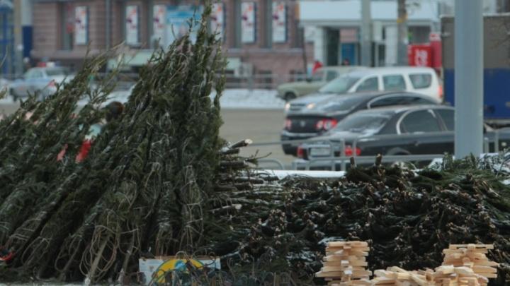 На улицах Челябинска развернут 200 ёлочных базаров
