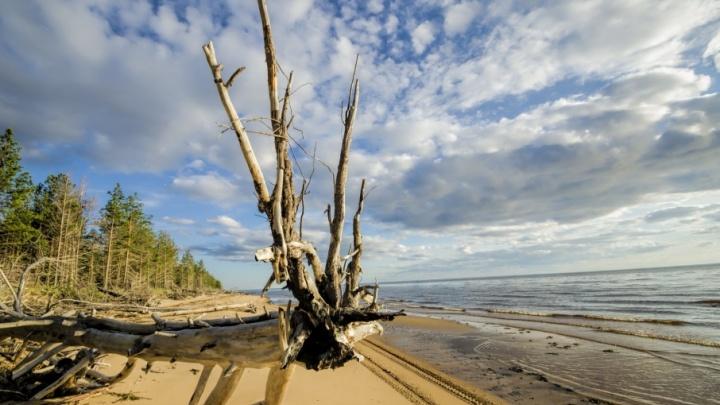 Дикий Мудьюг: 30 фотографий бывшего «острова смерти», который покоряет своей красотой