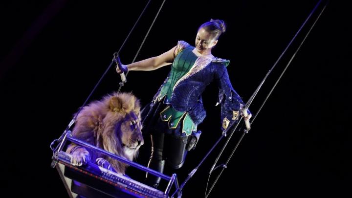 Созвездие цирка: львы-интеллектуалы, алогизмы на шесте и бобры на манеже