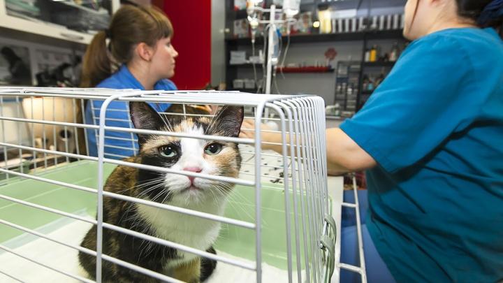 Ветеринары обнаружили, что у кошек появилась аллергия на хозяев