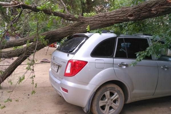 Сухое дерево рухнуло на припаркованный автомобиль