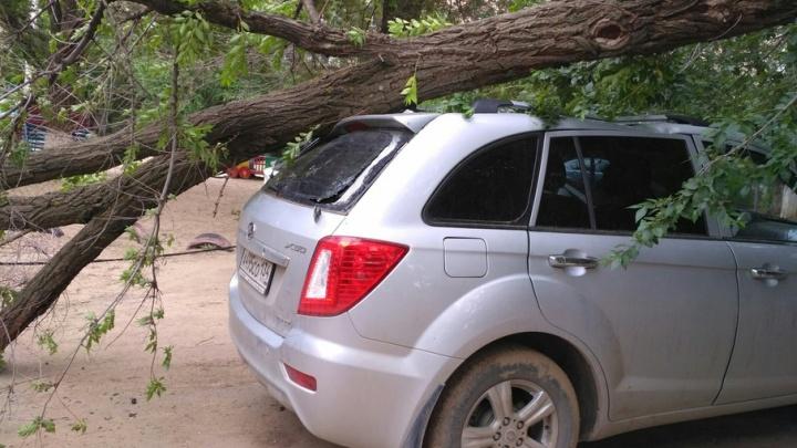 В Волгограде рухнувшее дерево разбило машину матери двух детей