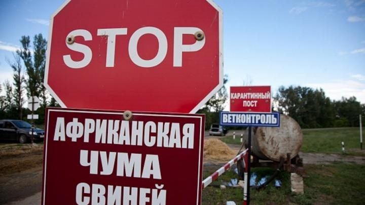 В Волгоградскую область вернулась чума свиней