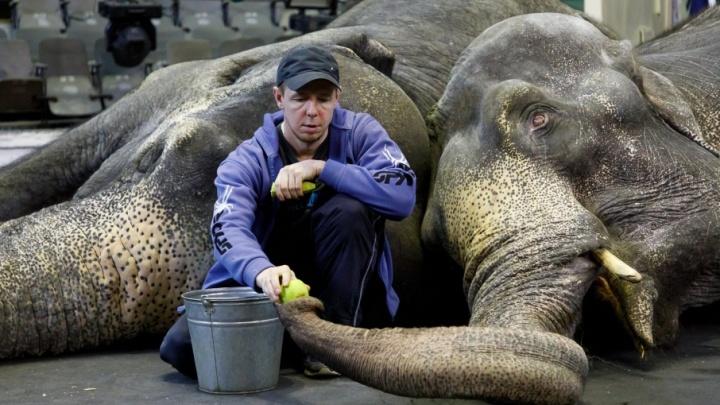 Большая и чистая любовь: в Волгоград приехали две слонихи-неразлучницы