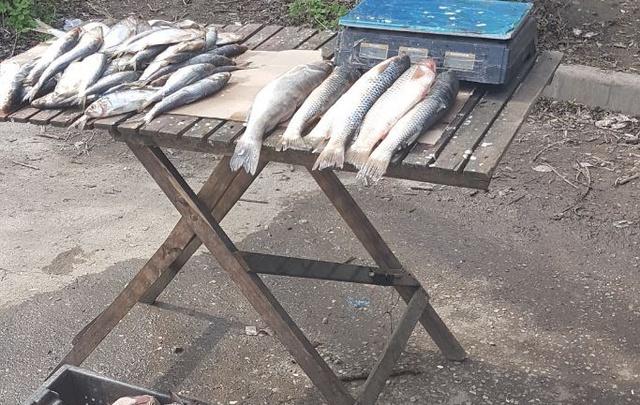 После рейда в Ростове уничтожили 20 кг рыбы