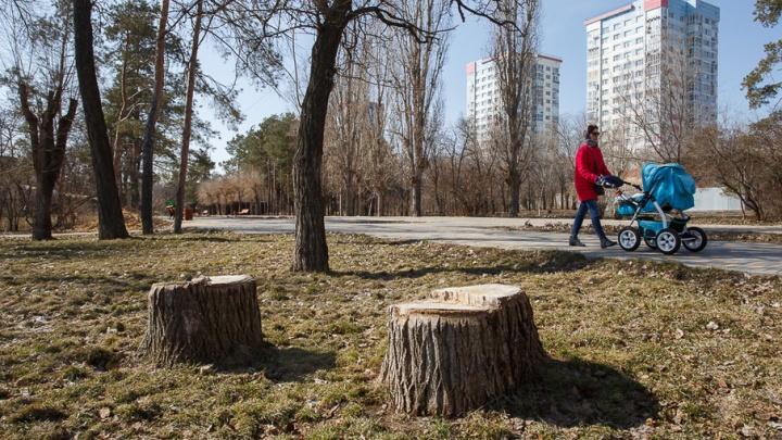 В ЦПКиО Волгограда появятся аквапарк, парковка и зона для выгула собак