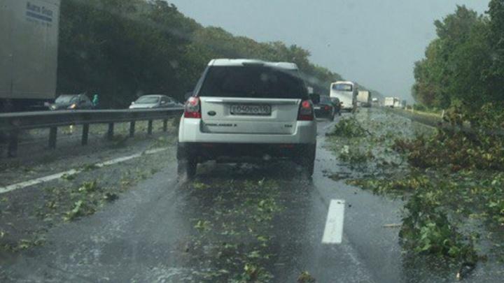 Дождь валит деревья на трассе под Ростовом