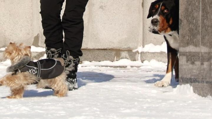 В Самаре детскую площадку предложили переоборудовать под выгул собак