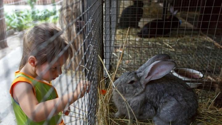 Руки прочь: волгоградские депутаты запретят тискать диких животных