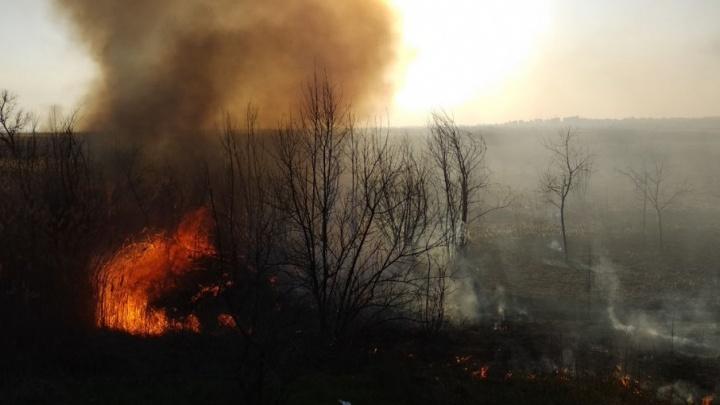 Ростовчанам запретили разводить костры и приезжать на автомобилях в городские леса