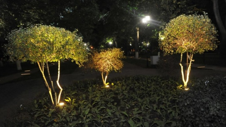 Кусты в Демидовском сквере начали светиться