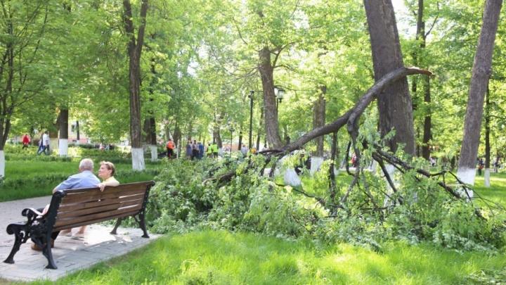 В Демидовском сквере две огромные ветки рухнули с деревьев на тротуар