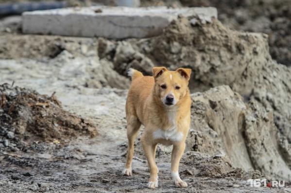 По вине сотрудника службы отлова животных бездомные собаки умирали в муках