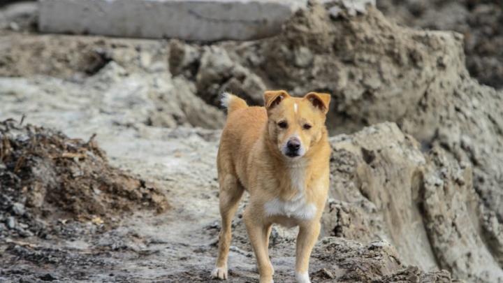 В Ростовской области ветеринар жестоко убил 173 собаки