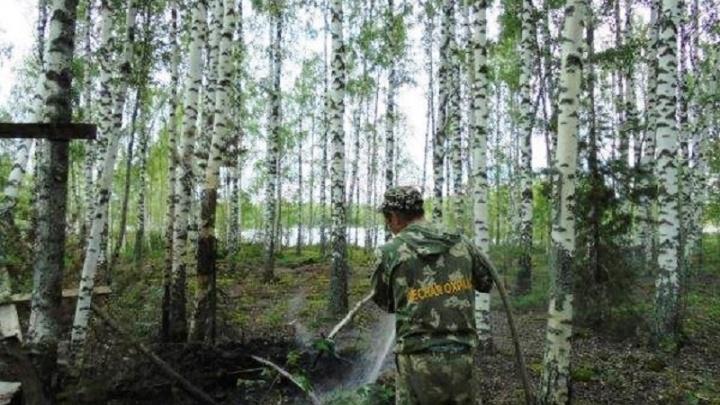 За неделю в лесах Ярославской области потушили шесть пожаров
