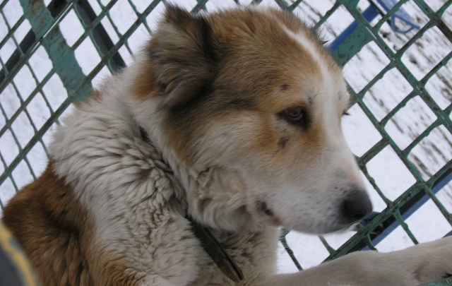 В Волгоградской области сторожевая собака напала на трехлетнего мальчика