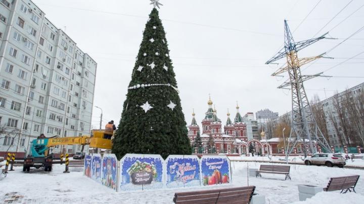 Елки по городу мчатся: где искать новогодние деревья в Волгограде