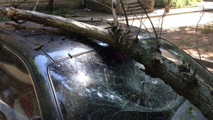 В Ростове попадали деревья