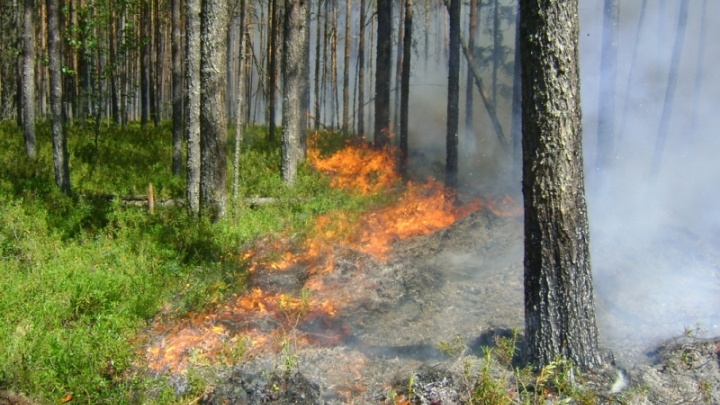 Число лесных пожаров и сумма ущерба от них в Поморье сократились втрое