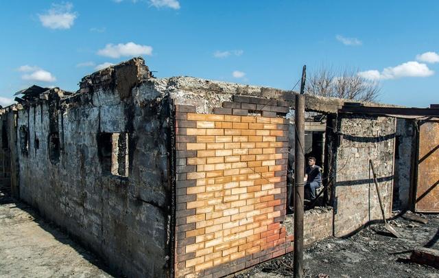 Шесть лошадей в ботсаду сожгли: официальная причина пожара